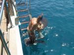 viskorf wordt uitgezet
